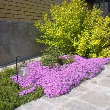 Красивый сад весной