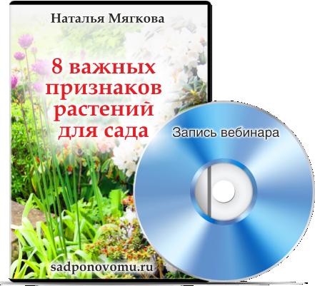 Disk-SADPONOVOMU