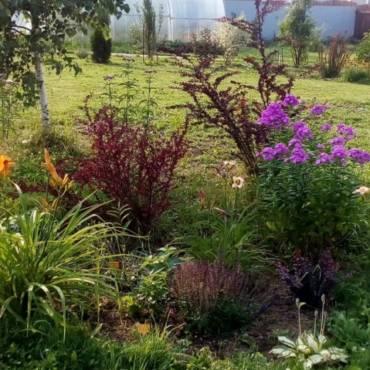 Что нам стоит сад построить…