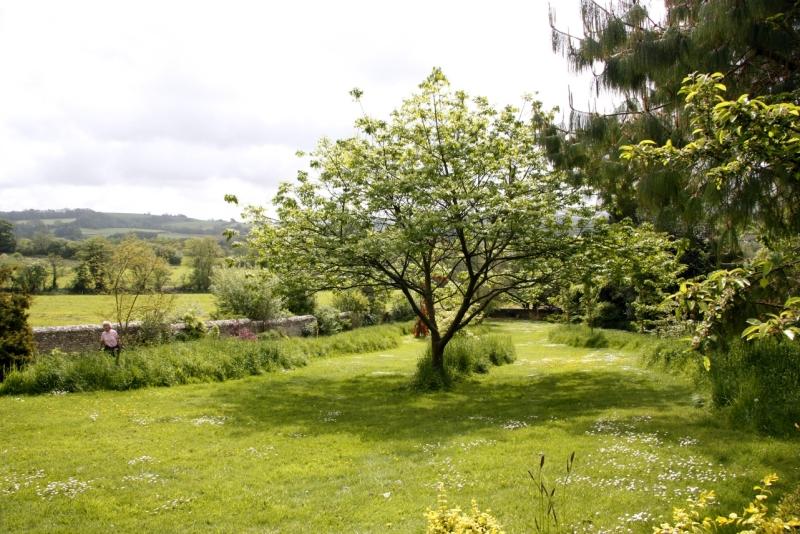 Луговой газон, фото