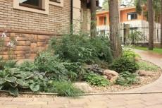 Растения на фоне стен дома