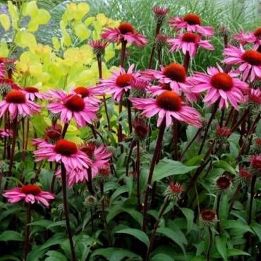 Подбираем третье растение кцветочной паре