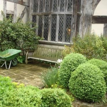 Что посадить в саду? Где брать растения для сада?