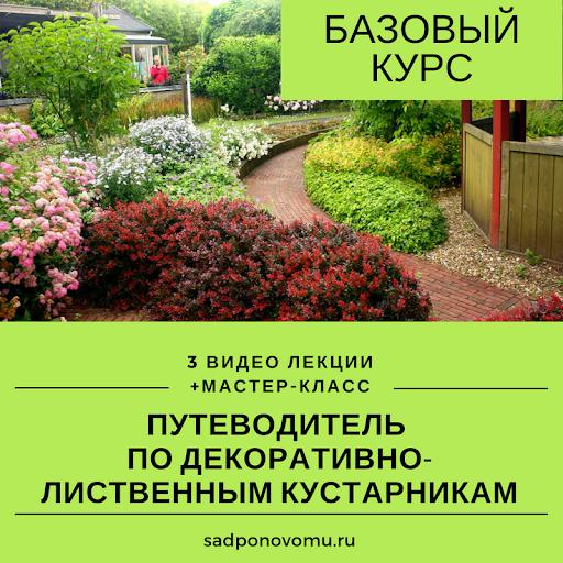 Декоративно-лиственные кустарники