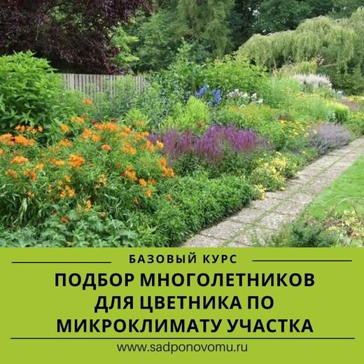 Подбор многолетников для цветника по микроклимату участка