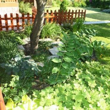 Что важно знать, создавая сад? Растения и свет