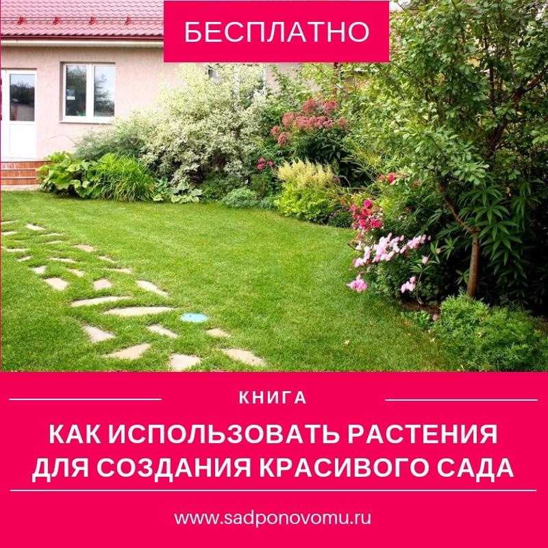 Как использовать растения для создания красивого сада