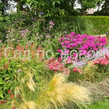 Модные растения для цветника