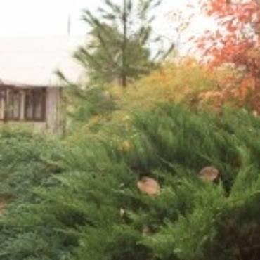 Декоративные деревья и кустарники осенью