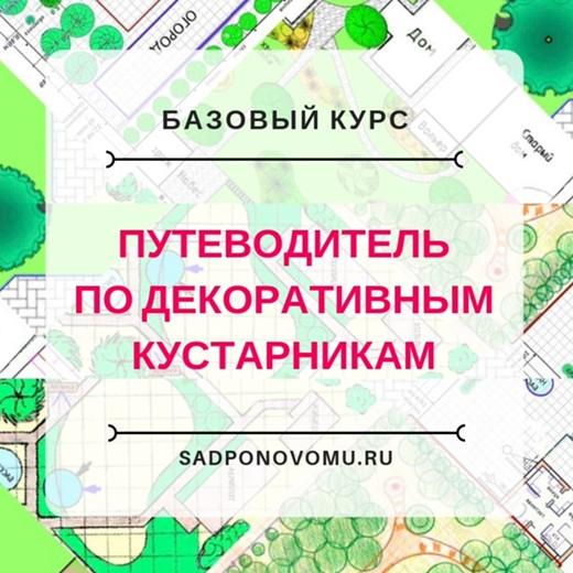 Путеводитель по декоративным кустарникам