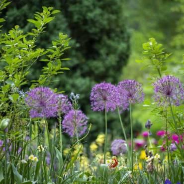 Как спланировать сад? Первая ошибка начинающего дачника