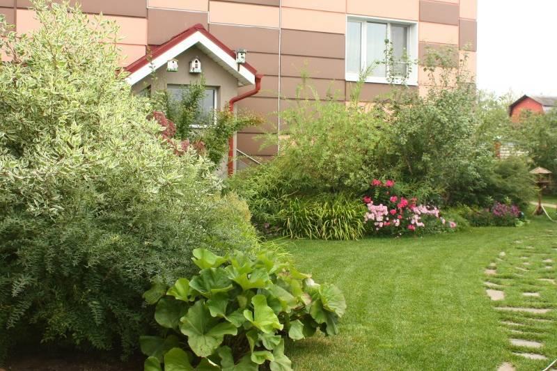Растения на фоне стен 3