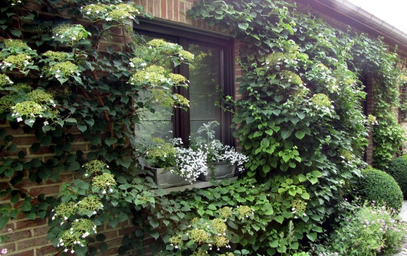 Растения на стене дома