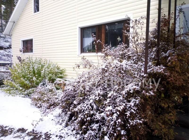 Зима в нашем саду