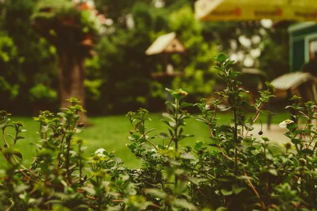 Сад по плану