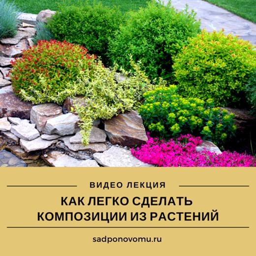 """Лекция """"Как легко сделать композиции из растений"""""""