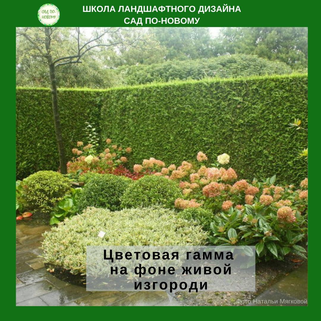 cvetovaya-sxema-cvetnika-4.jpg