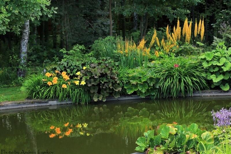 Примеры отражения сада в воде