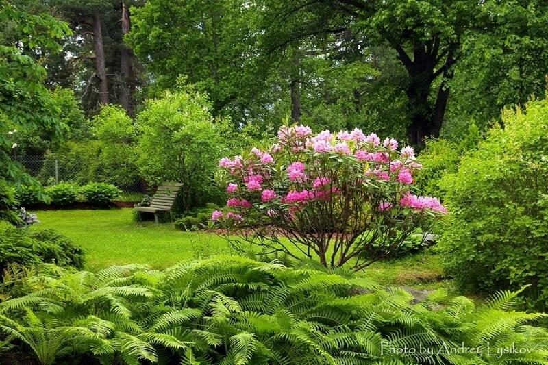 Главное – цветущий куст на зеленом фоне