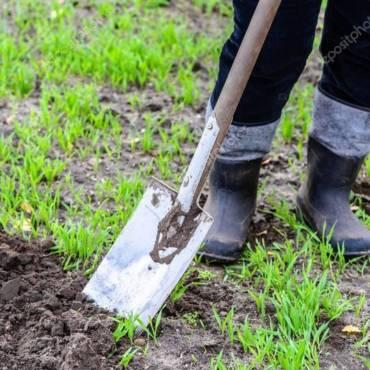 Как правильно сажать и пересаживать растения